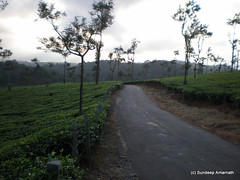 PA010283 (sundeep.an) Tags: teaplantation teaestate tatateaestate