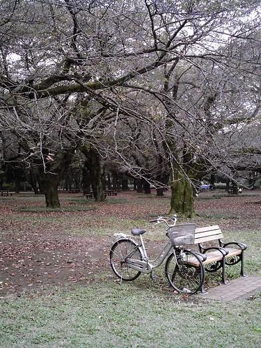 Bicycle (izone 550)