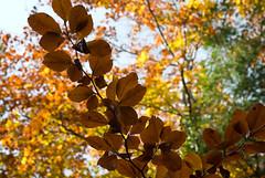 ostatnie wyrazistoci listnych ksztatw (p.lorenc) Tags: lilla lorencowie