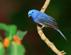 #347  (Hi you guys !) (John&Fish) Tags: wild bird nature wow taiwan best blueribbonwinner naturescall ar1 abigfave ishflickr yourbestshot magicofaworldinmacro concordians