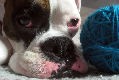 Thinkin' about knittin'.