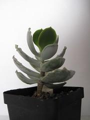 IMG_0197 (Plantules) Tags: