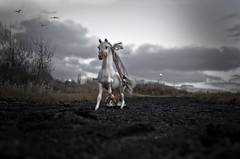 I fly over Her in my Dreams (Elsa Prinsessa) Tags: trees horse black cold birds clouds silver iceland sand purple surrealism reykjavik fantasy whitehorse mystique dimmalimm supershot platinumphoto theunforgettablepictures elsaprinsessa elsabjrgmagnsdttir