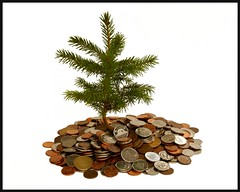 Money doesn't grow on tree ! But investing in them is the best way to capture the Carbon