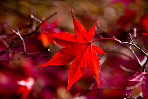 Just one red leaf
