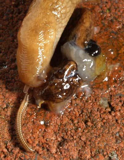 SlugEatSlug
