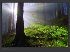 finding the last unicorn (gregor H) Tags: autumn trees fall misty backlight forest austria ligth gettyimages raysoflight vorarlberg thelastunicorn platinumphoto brserberg pprowinner thesecretlifeoftrees alemdagqualityonlyclub alemdaggoldenaward