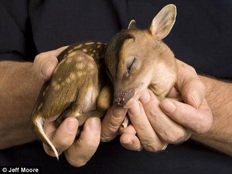 Baby Rupert