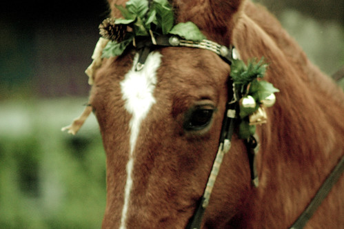 Horse finery