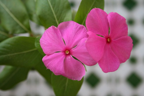 Unas flores en una maceta