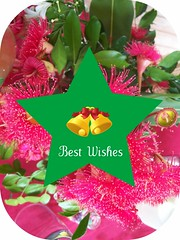 Red flowering gum for Christmas