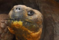 Haughty Tortoise