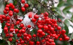 Capodanno 2009 - Nevicata