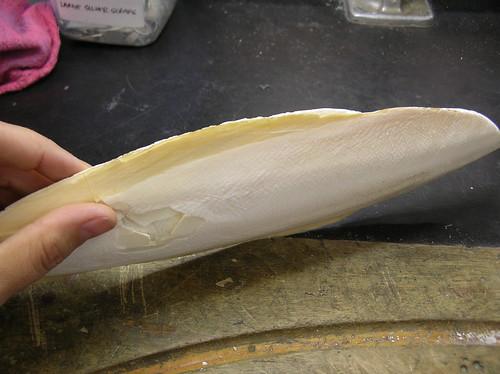 Cuttlefish Casting 04