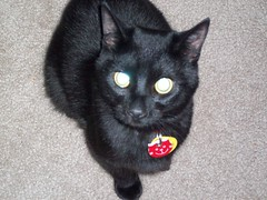 i can make my eyes glow (lizzie c.) Tags: cat kitten kitty dominick