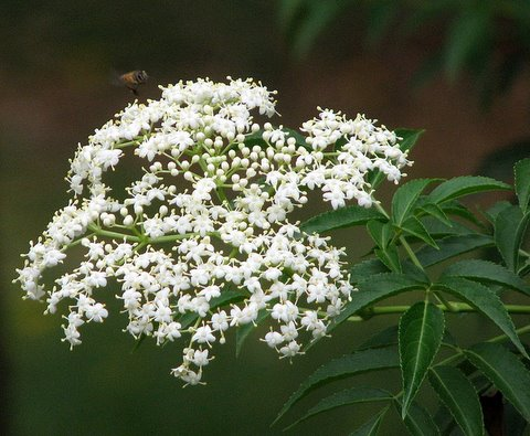 un id flower lalbagh 220308