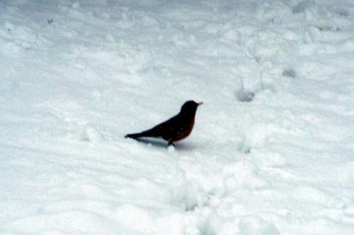 Snow 32808 Bird