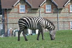 Longleat Safari Park #13