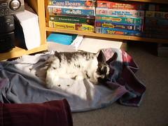 Shh! Sleeping bunny.
