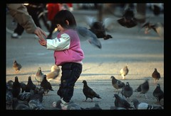 Feeding the Pigeons (Eric Nicholas) Tags: park camera family pink bird love film girl birds japan japanese fly flying kid nikon fuji father daughter wing young seed off velvia sharing take feed manual coolscan flap share fm2 ericnicholas
