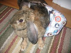 Now she won't let it go (electronization) Tags: rabbit bunny usagi tokidoki
