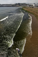 The Green Green Grass (Haysie1) Tags: uk sea seaweed green grass coast seaside sand holidays britain south tourists devon british paignton brixham britishseaside southdevon canon40d coolestphotographers