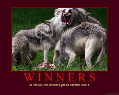 d winners 2 (dmixo6) Tags: food nature funny wolf motivator order natural competition darwin humour victory eat pack irony despair motivation parody fangs losers success demotivator survival wolves demotivation dmixo6