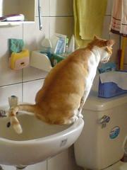 多多又再洗手台上尿尿了 作者 peiru24