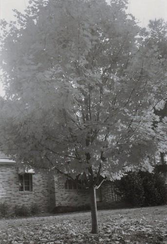 granddaddy's tree