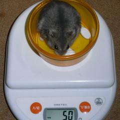 コー太は体重が増えました。