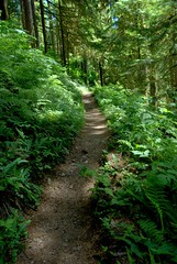 The path to.......... (SusanCK) Tags: forest path evergreen hikingtrail susancksphoto