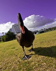 Burswood, Australia (C) 2008