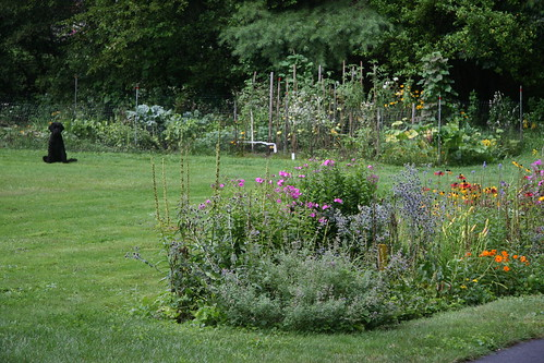 Skippy by the gardens