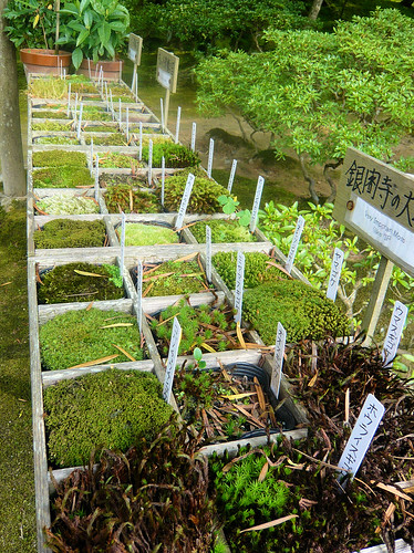 Varieties of moss - Ginkakuji