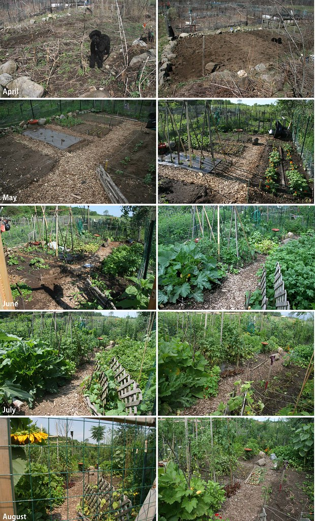 my community garden plot - april to august - 2008