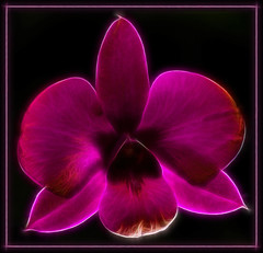 Purple Haze (There and back again) Tags: orchid flower macro photoshop purple sigma dendrobium onblack sd14 aplusphoto diamondclassphotographer platinumheartaward fractalius