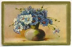 postcard (* angelandim *) Tags: daisies postcards margaridas oldpostcards vintagepostcards oldcards postaisantigos