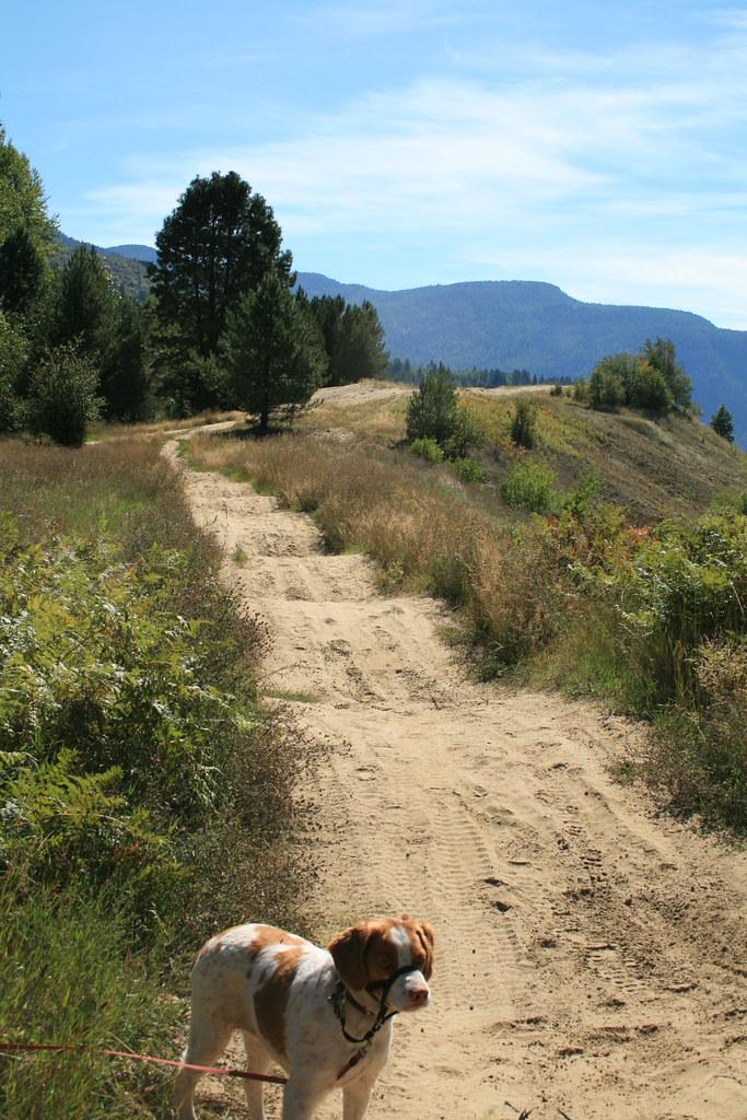Dirt bike trail or is it motocross?