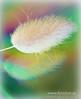 something different ... (G.Hotz Photography (busy as a bee =)) Tags: portrait people food lake photography dornbirn feldkirch österreich stillleben foto fotograf fotografie hard bregenz gerald photograph bodensee constance bludenz oesterreich vorarlberg produkt hotz hochzeitsfotograf colorphotoaward ondarena fotolyst