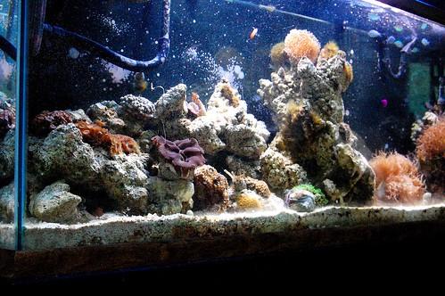 Fishtank (Myers)