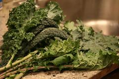 kale harvest
