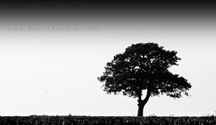 Steve's Tree (geeo123) Tags: old sky white black tree photoshop landscape photography this george do steves uncle wheat steve like 15 just years 2008 started stree bentley bassett dunton blackwhitephotos golddragon mywinners aplusphoto geeo123 steve7july