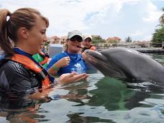 P9260671 (ABC Dolphin Trainer Academy) Tags: