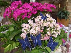 3 Garden Sale (Ludi - Lucia Dias) Tags: feira bazar gardensale