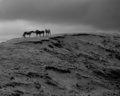 freedom (miguelyn...) Tags: chile horses caballos perception nikon southpacific easterisland rapanui islad