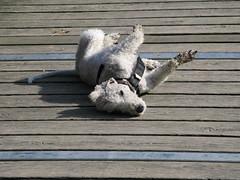 Hund (photon_de) Tag