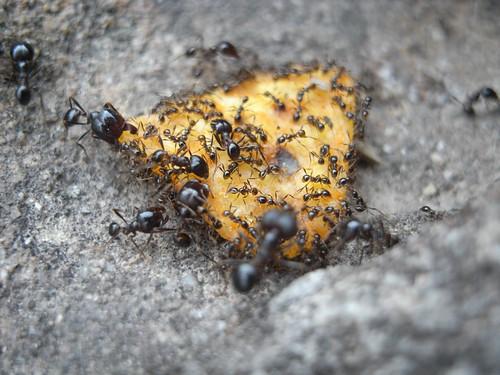 你拍攝的 61螞蟻雄兵。