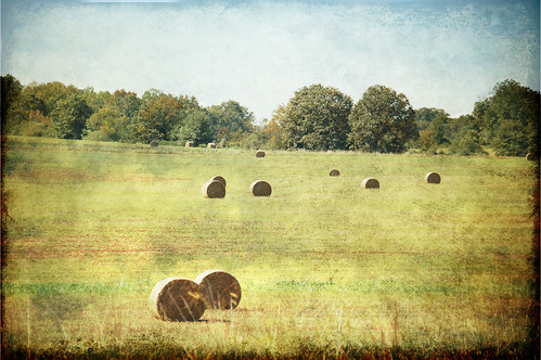 Bales of Hay Texture