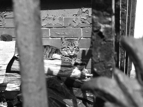 Stray Cat, Brooklyn