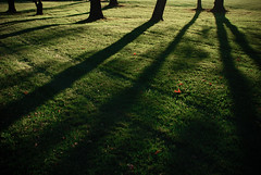 (shiphome) Tags: shadows 2008 greengrass talltrees 296 octobersunset goldenhourlight